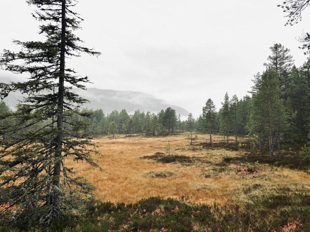 myr in Noorwegen